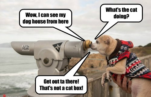 dogs dog house Telescope Cats - 8381902592