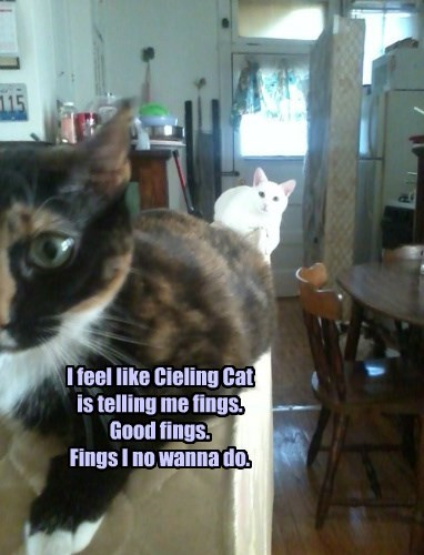 I feel like Cieling Cat is telling me fings. Good fings. Fings I no wanna do.
