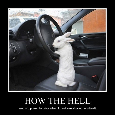 cars,cute,bunny,funny