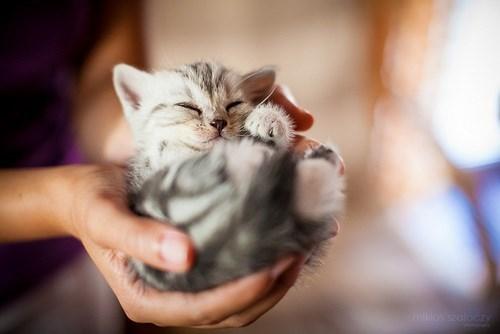 kitten cute Cats - 8382438400
