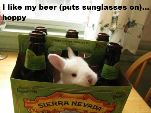 beer hops bunny funny - 8382438656