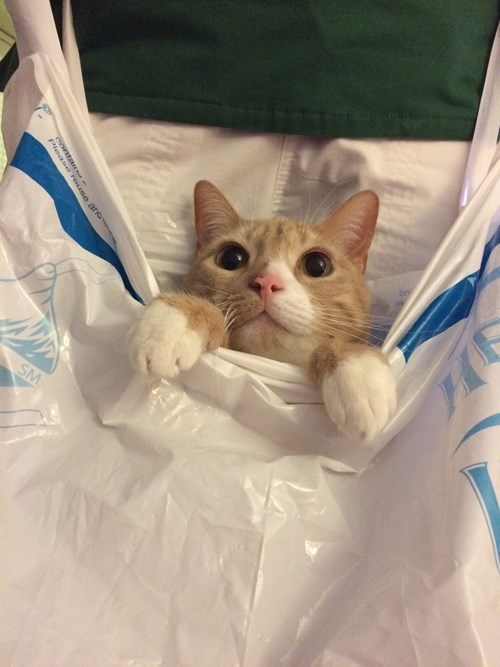 bag,kitten,Cats,hiding