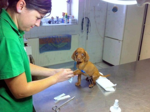 dogs,puppy,cute,vet