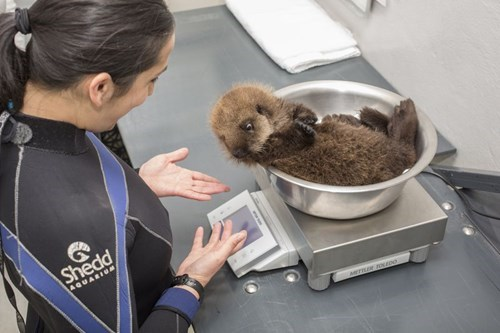 scale cute otter