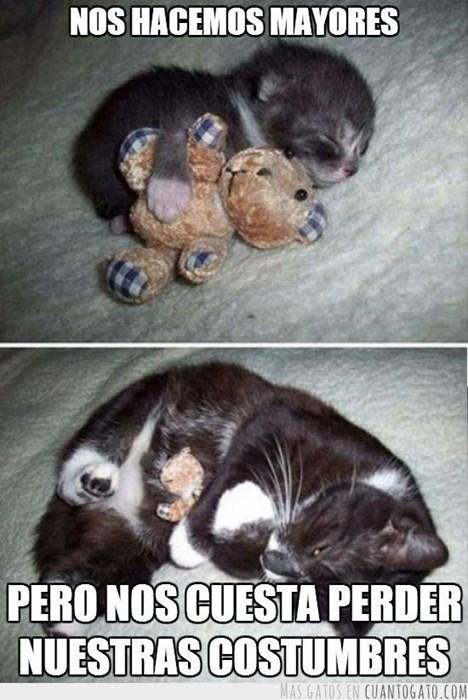 gatos bromas Memes animales - 8382476288