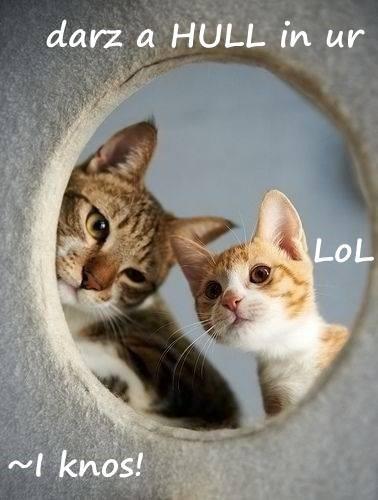 animals cat criticism lol - 8382487296