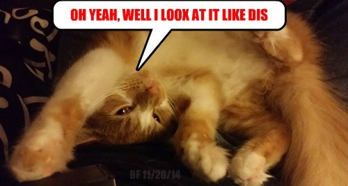 opinion tabby Cats - 8382504448