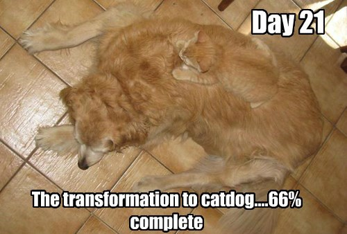 tabby dogs golden retriever Cats - 8382881536