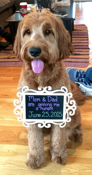 dogs,parenting,pregnant,announcement