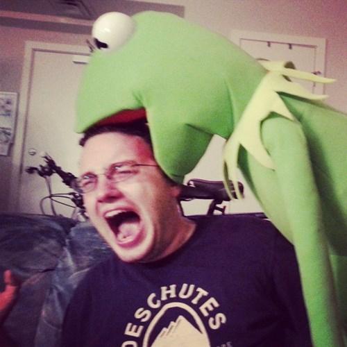 Kermit'srevenge