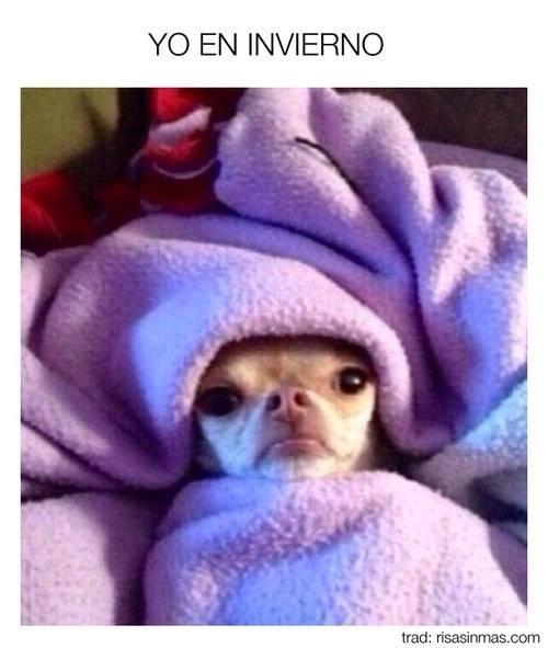 bromas perros Memes animales - 8383144448