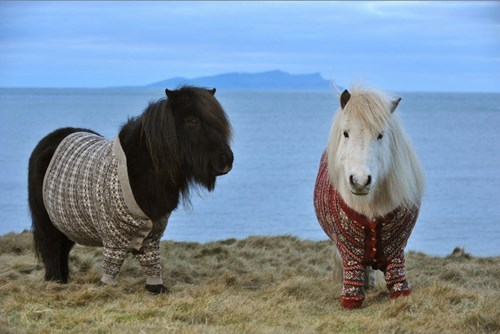 cute sweater miniature horse - 8383160320