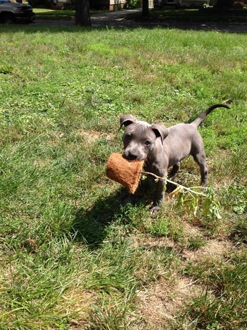 dogs plants puppy cute - 8383166464