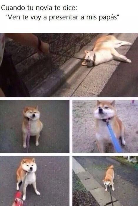 bromas perros Memes animales medios - 8383172608