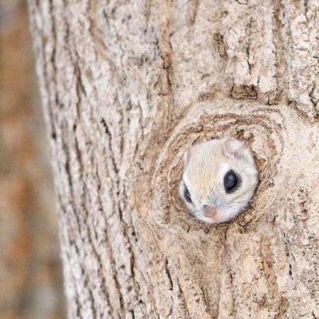 squirrel cute tree - 8383176704