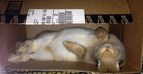 happy bunday,box,bunny