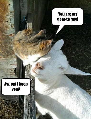 You are my goat-to guy! Aw, cat I keep you?