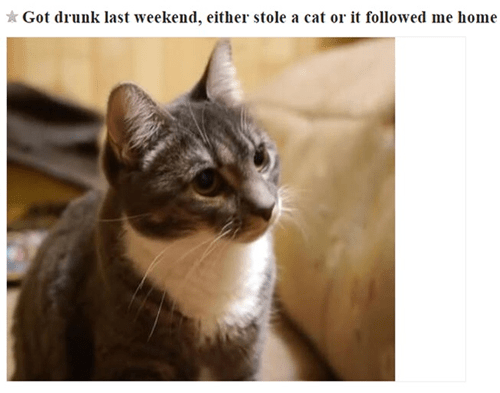 drunk idiots Cats funny after 12 g rated - 8383260416