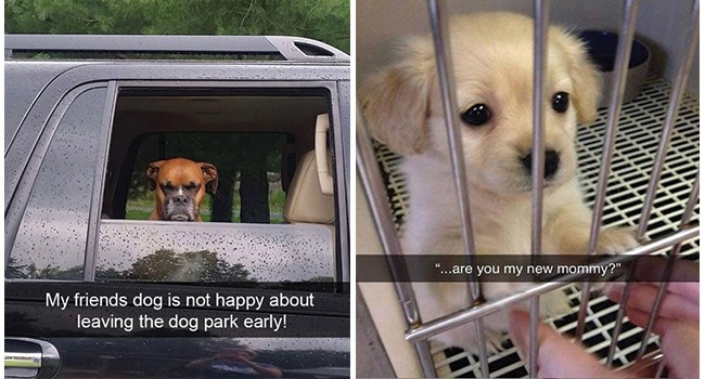 dogs dog memes funny dog memes funny memes Memes doggo doggo memes - 8383493