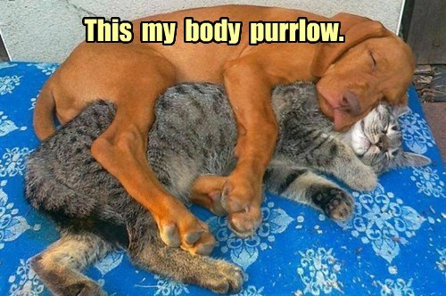 Pillow dogs napping Cats - 8383594752