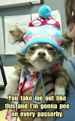 dogs pee grumpy angry - 8383596288