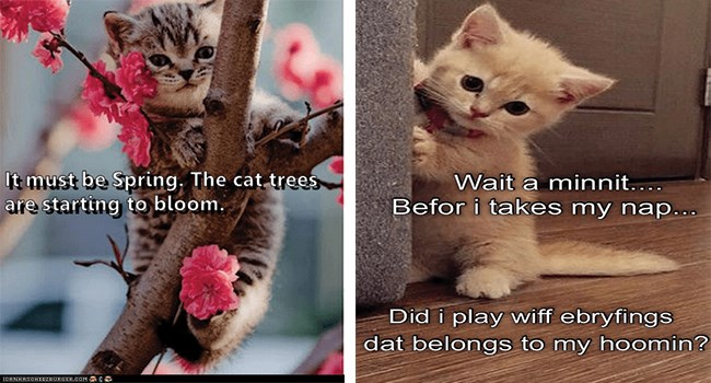 funny cat memes lolcats funny memes Memes lol funny cats Cats cat memes - 8383749