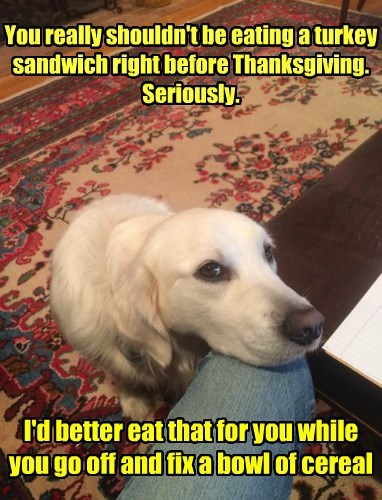 You really shouldn't be eating a turkey sandwich right before Thanksgiving. Seriously. I'd better eat that for you while you go off and fix a bowl of cereal