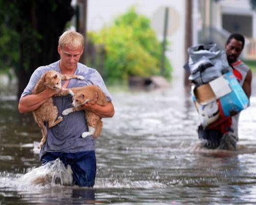 two cats carried on by a man in a flooded area