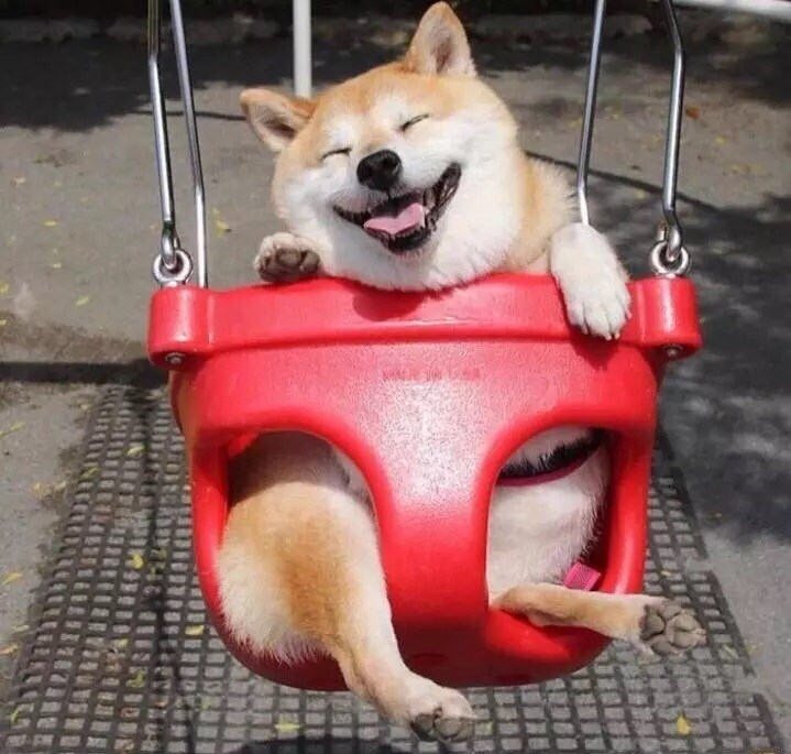 dogs,doge,photoshop,swing,happy,shiba inu,Reddit,photoshop battle
