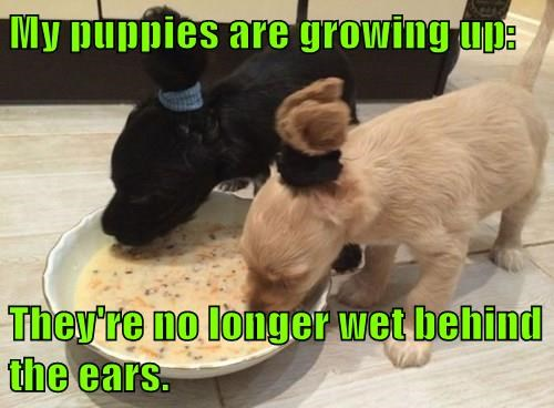 animals dogs growing up puns - 8384350720