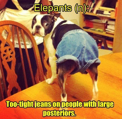 dogs,pants,dictionary