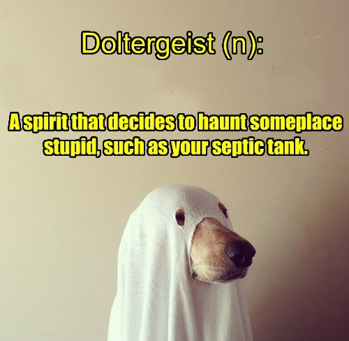 dogs ghost poltergeist haunted - 8384370176