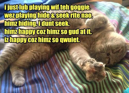 tabby hide and seek jerk Cats - 8384396032