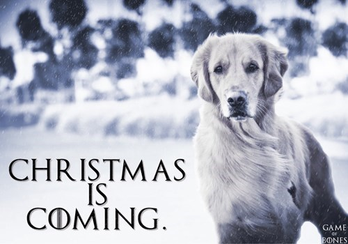 christmas dogs Winter Is Coming golden retriever - 8384479488