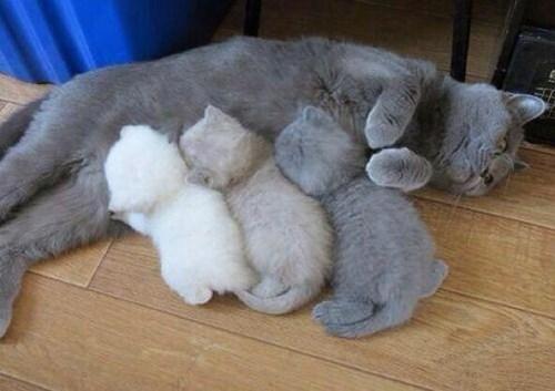 kitten Cats - 8384480256