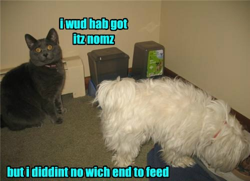 dogs noms Cats - 8384521984