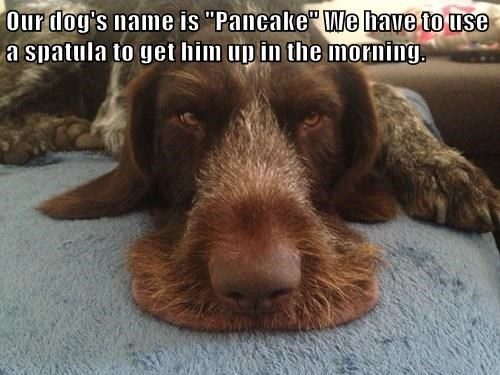 "Our dog's name is ""Pancake"" We have to use a spatula to get him up in the morning."