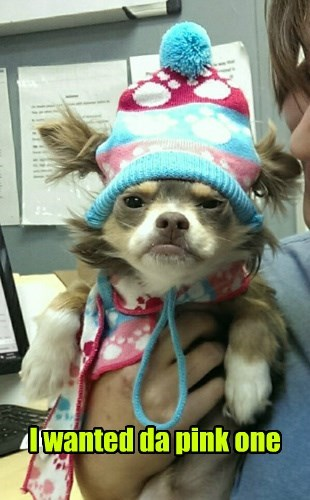 dogs grumpy why hat - 8384863232