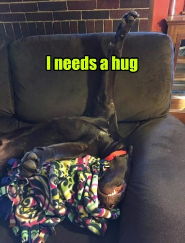 dogs cuddle i love you hug - 8384864512