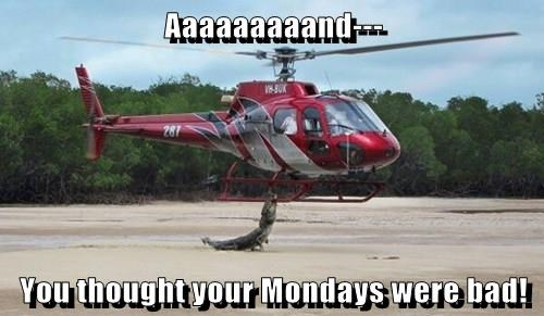 animals alligator helicopter monday - 8385009920