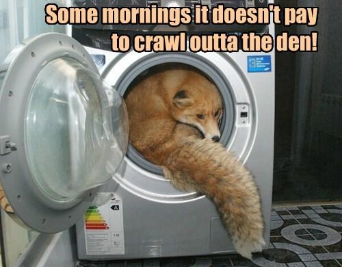 socks fox mondays i have no idea what im doing - 8385172992