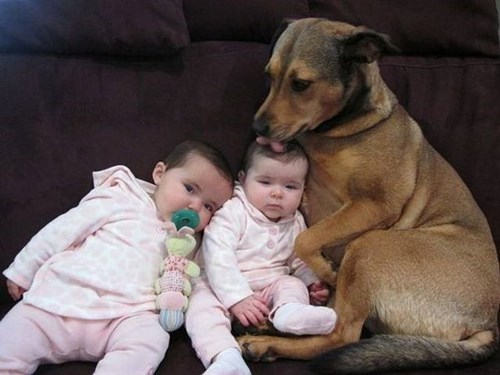 dogs baby lick parenting - 8385224960
