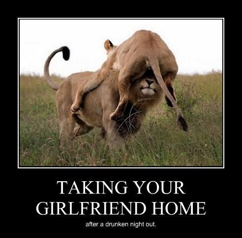 drunk girlfriend lion funny - 8385239040