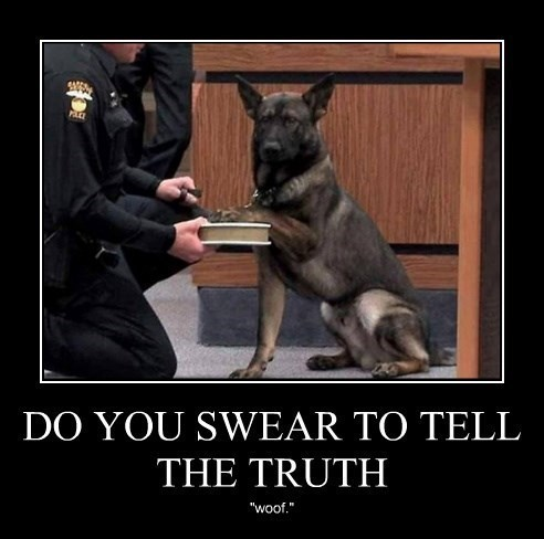 dogs,witness,truth,court