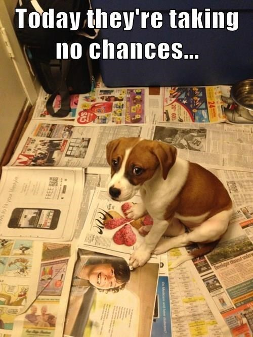 dogs puppy accident newspaper - 8385339392