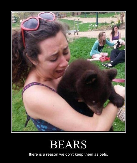 bears cute vicious funny - 8385367040