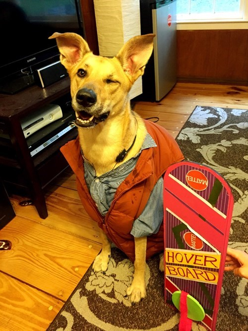 dogs,cosplay,scifi,back to the future,cute