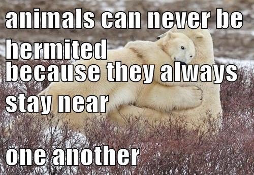 animals - 8385467648