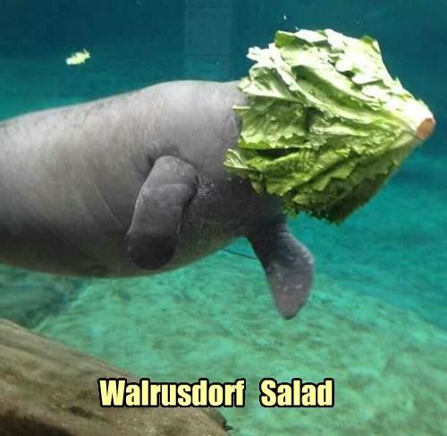 manatee pun walrus salad - 8385753344