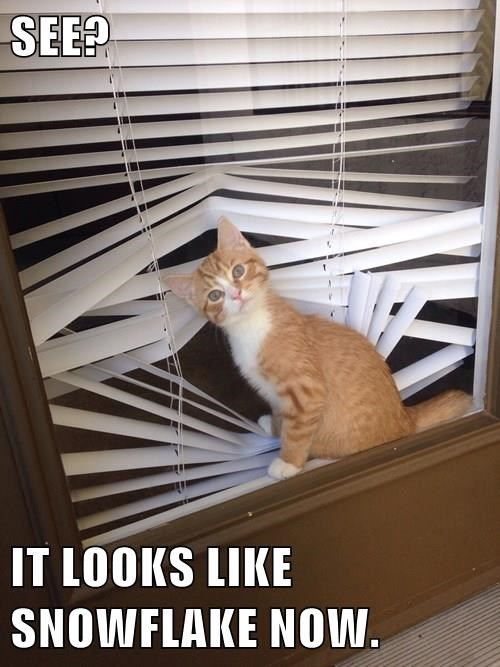 animals blinds Cats i have no idea what im doing - 8385792768